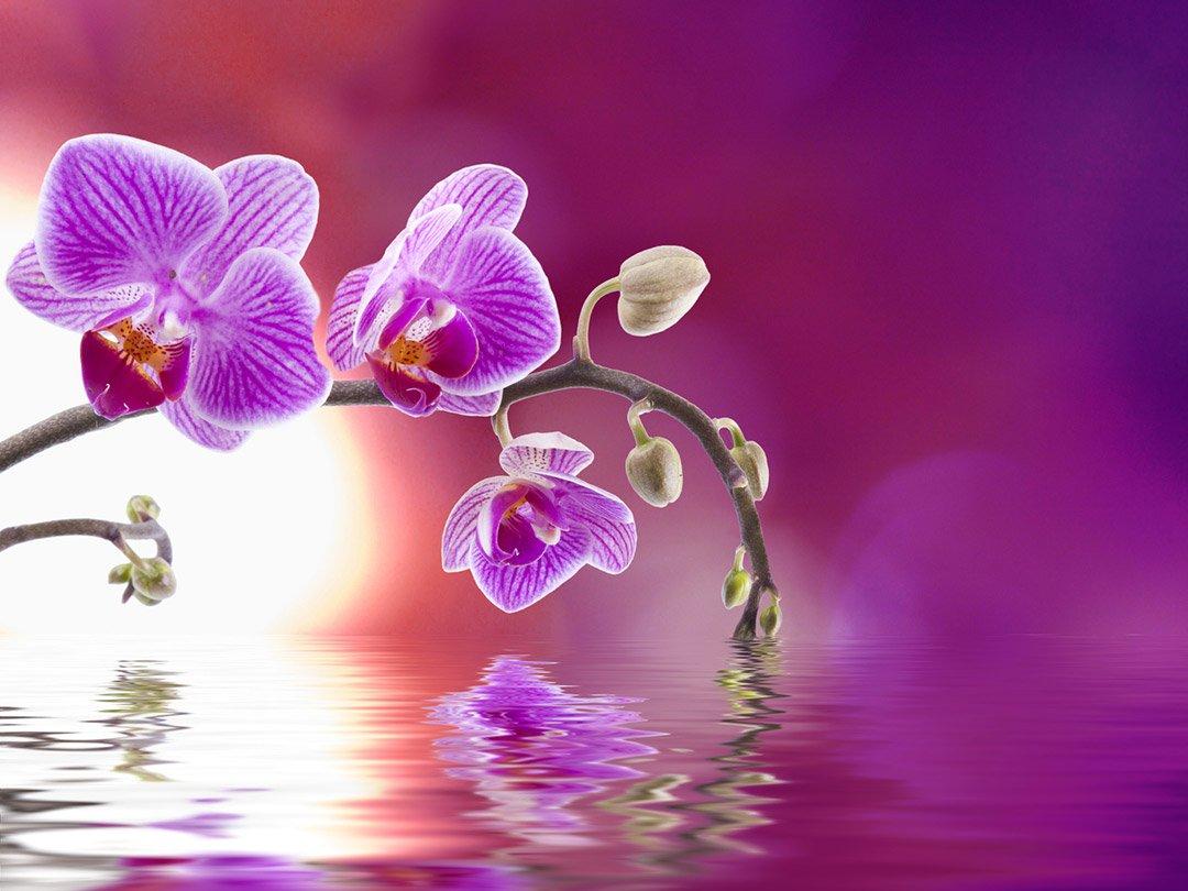 Belle orchidée couleur fuchsia